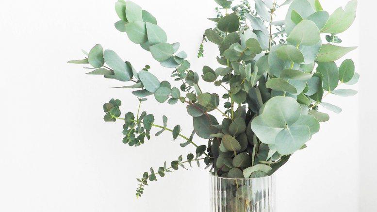 plante verte, entretien plante intérieur, plante lumière, plante arrosage